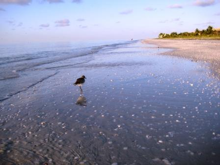 Shore Bird, Sanibel Island, Florida