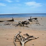 Fantastical Blackrock Beach, Big Talbot Island SP