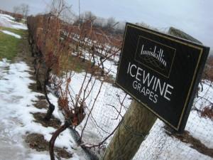 Inniskillin Vineyard, Niagara Icewine Festival 2010