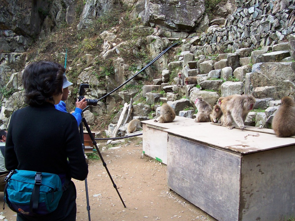 Monkeys Pose for Photographers in Jigokudani Wild Monkey Park