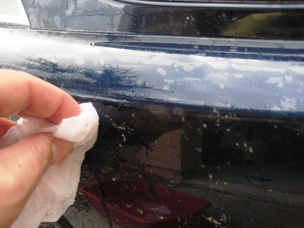 Remove Bugs Washing Car