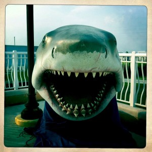 World's Largest Exhibit of Authentic Jaws Movie Props and Memorabilia in Punta Gorda May 14 and 15, 2011
