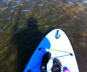 Stand Up Paddleboarding with Grande Tours in Placida, Fla.