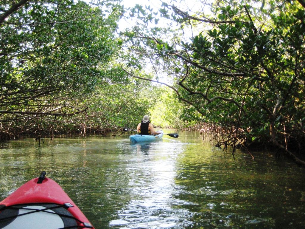 ...Or Another Day the View from My Office is a Mangrove Tunnel Or...