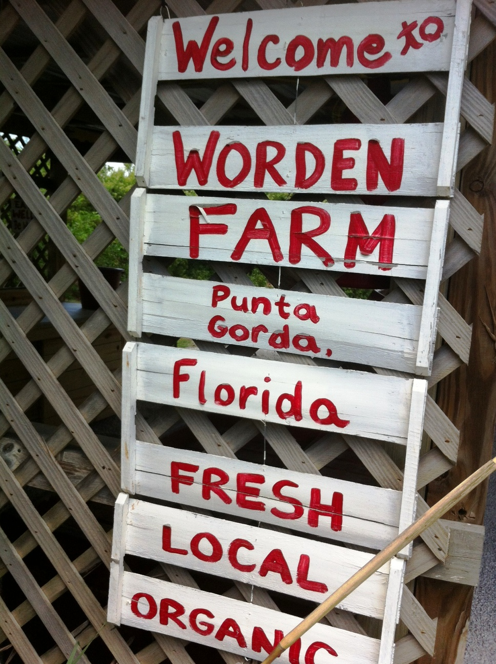 Learning to Cook Quick, Easy and Healthy Vegan Meals at Worden Farms in Punta Gorda, Fla.