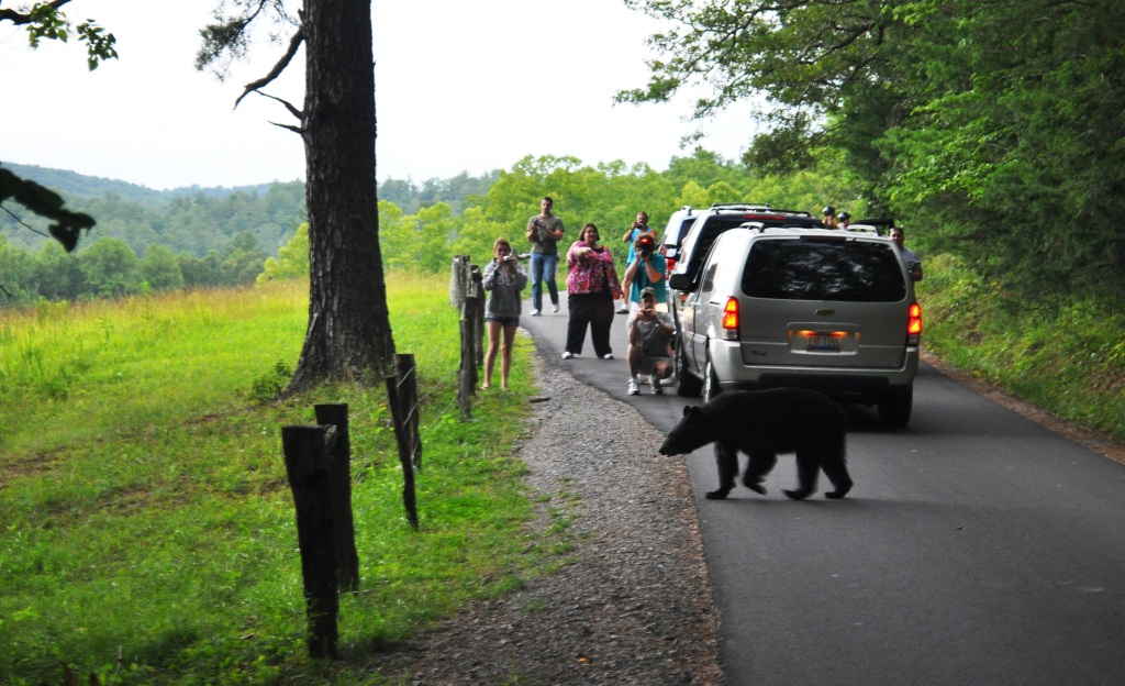 Enjoy Wildlife from a Distance During National Park Week (Photo: Great Smoky Mountain National Park, Tenn.)