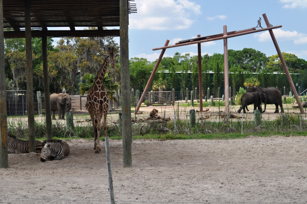 Safari Africa at Lowry Park Zoo, Tampa, Fla.