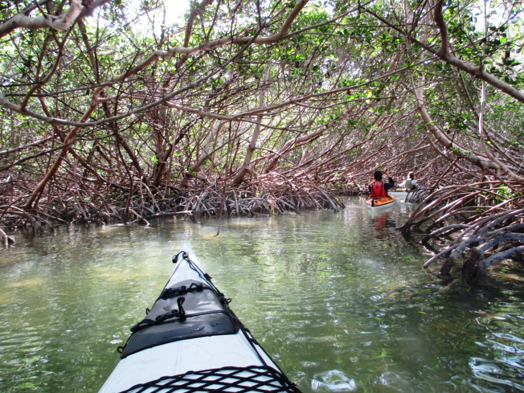 Kayaking the Florida Keys with Burnham Guides - A Mangrove Tunnel, Marathon, Fla., Dec. 8, 2013